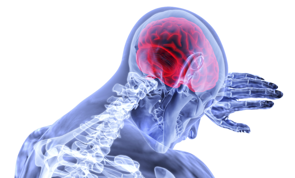 cerveau et autisme